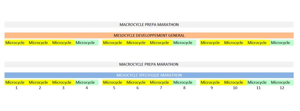 Les différents cycles de l'entrainement marathon